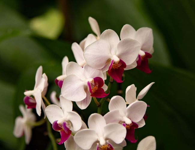 Orchidaceae Orchidee Flowering Plant Flower Plant Fragility Vulnerability  Petal Freshness Inflorescence Beauty In Nature Flower Head Growth Close-up Focus On Foreground Nature Orchid Day No People Pollen Pink Color Outdoors