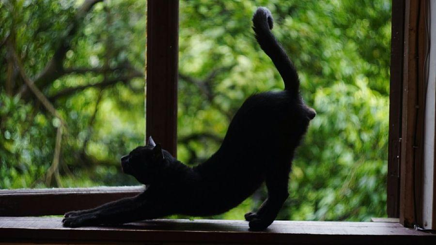 Close-up of black cat in zoo