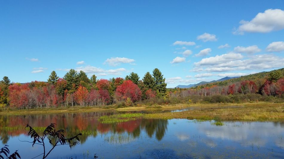 Tranquil Scene Reflection Water Lake Sky Scenics Waterfront Beauty In Nature Cloud Outdoors Cloud - Sky No People Multi ColoredLandscapes Fall Leaves Changing Colors Foliage, New England Red Flowing Water Clear Sky New Hampshire New England  Campton, NH Diminishing Perspective Full Frame