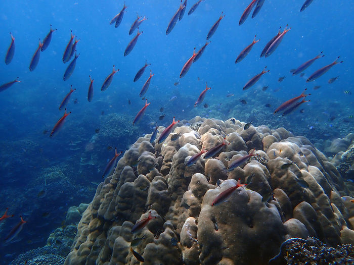 Flock of fish swimming in sea