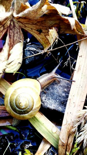 Snail Day High Angle View No People Outdoors Close-up Nature Beautiful BC, Canada Canada Naturelovers Snails Pace EyeEmNewHere