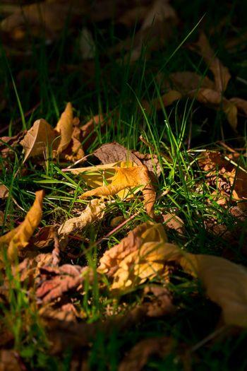 Leaf Fall Fall