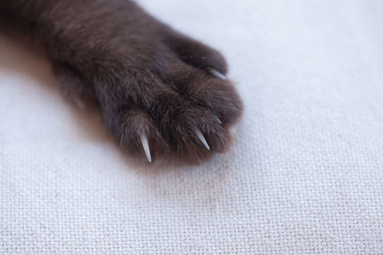 cat nails or cat's hand paw Animal Body Part Animal Leg Cat Nails Cat's Hand Close-up Domestic Animals No People Paw Pets EyeEmNewHere