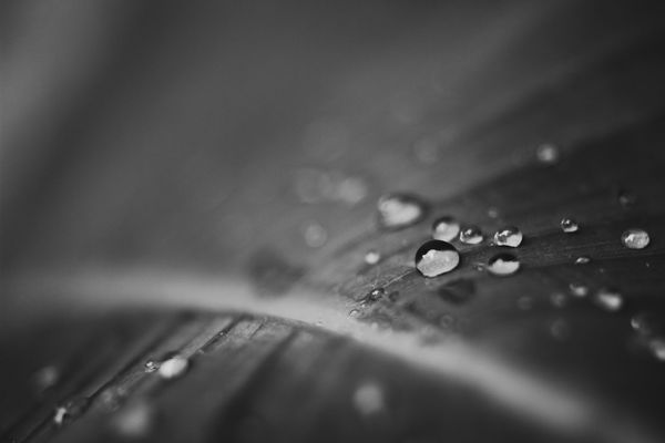 Canon Canonasia Canon_official Canonphotography Natgeo Nature Nature_collection Nature Photography Naturelovers Waterdroplets Raindrops Blackandwhite Bnw_collection EyeEm Malaysia Tpppfeature VSCO عرفانphoto