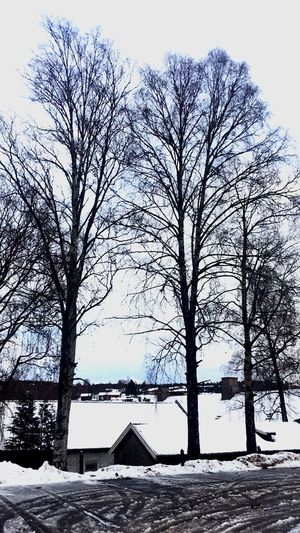Winter Winter Tree Snow Cold Temperature No People Sky Outdoors Nature Beauty In Nature Day House Architecture Branches Bare Tree Kongsberg
