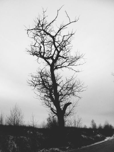 Tree Branch Bare Tree Rural Scene Tree Trunk Sky Landscape Foggy Deciduous Tree Snowcapped Mountain Isolated Snow Covered Countryside Snowcapped Remote Weather Lichen Lone Overcast Snow Snowfall Storm Cloud Scenic View Fog Weather Condition Idyllic Single Tree Tranquil Scene Hazy  Single