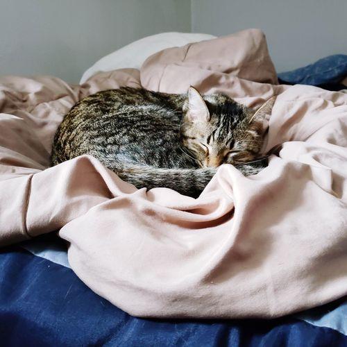 Restful kitten