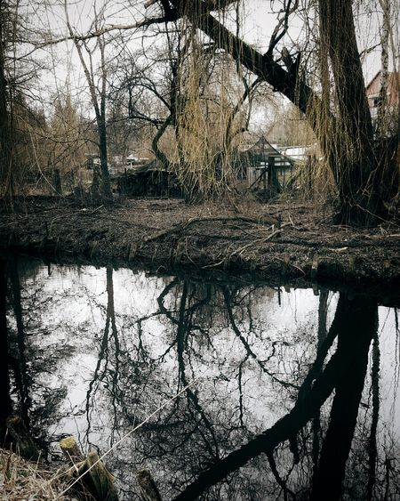 By The River Water Reflections River Riverside Nature Nature_collection Nature Photography Escaping Walking Landscapes With WhiteWall Getting In Touch Showcase March Spring