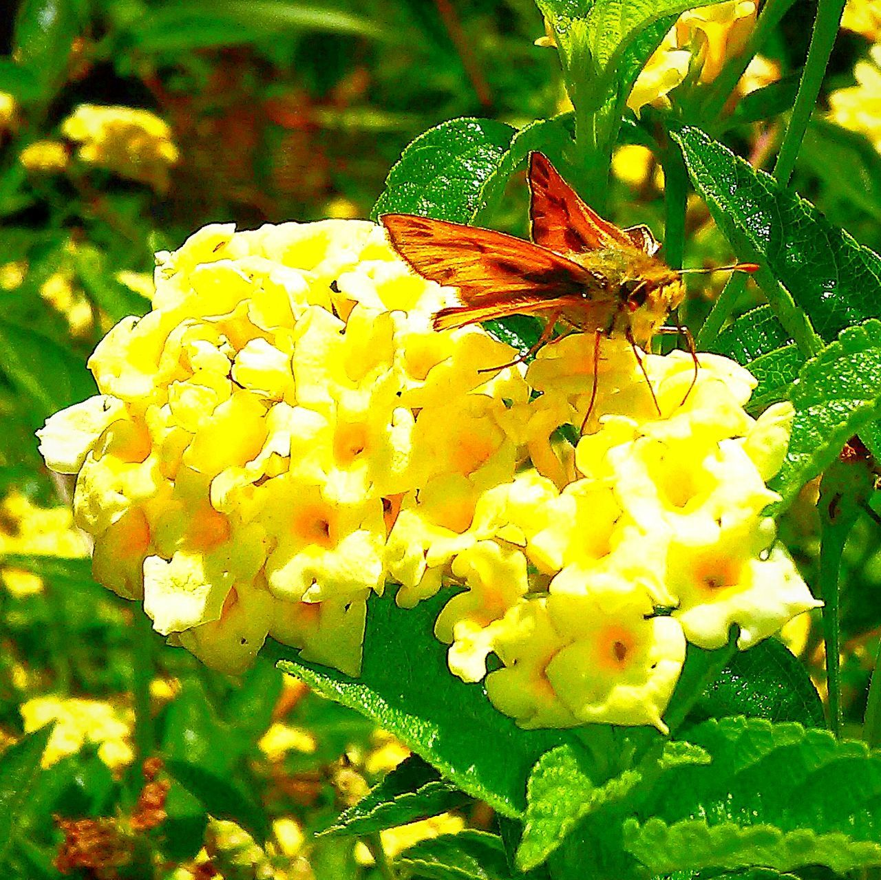 flower, animal themes, one animal, animals in the wild, insect, growth, fragility, nature, plant, freshness, wildlife, petal, animal wildlife, beauty in nature, outdoors, day, no people, focus on foreground, close-up, flower head, yellow, green color, perching, pollination, blooming