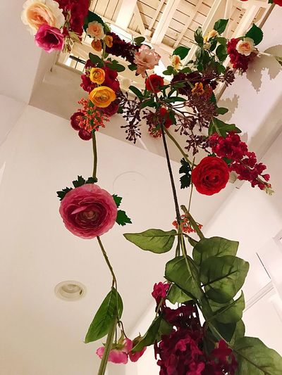 Bouquet Plant Flower Decoration Freshness Flowering Plant Nature Leaf Plant Part Hanging Growth Beauty In Nature Vulnerability  Fragility Low Angle View Vase Tree