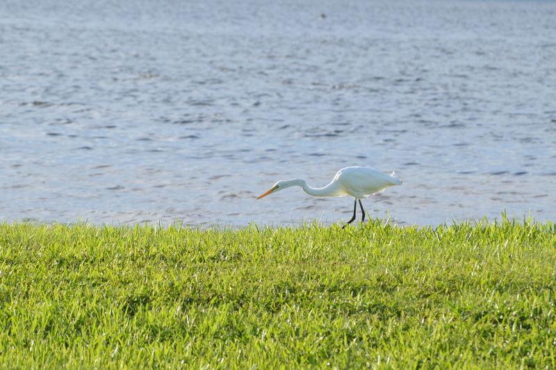 Crane at lakeshore