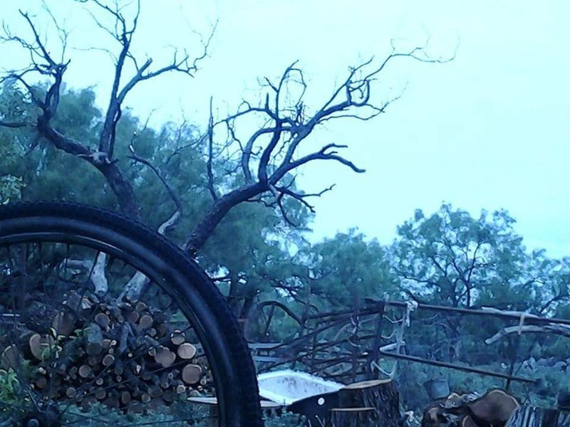 Northside San Angelo Tree Bicycle Bare Tree No People Land Vehicle Day Outdoors Branch Nature Sky