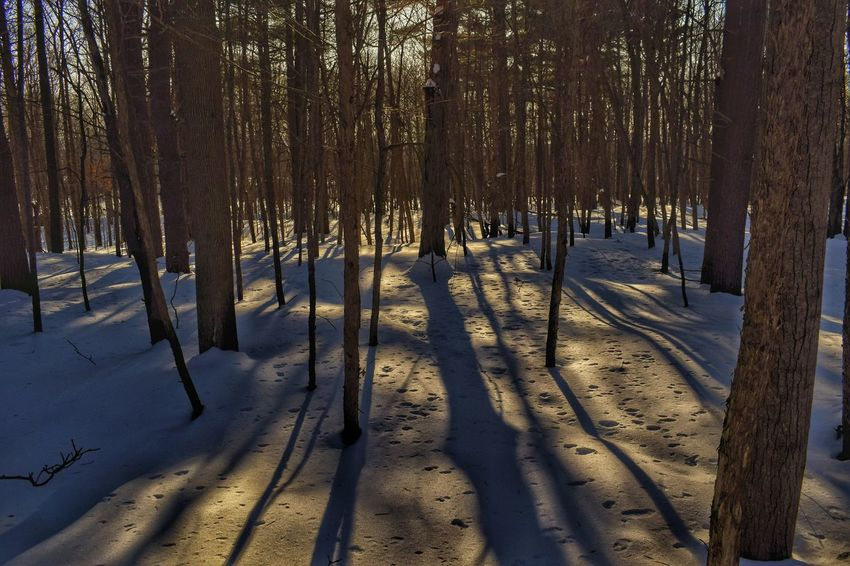 Tree Snow Winter Forest Shadow Sunlight Nature Beauty In Nature Tranquility Scenics Outdoors WoodLand The Great Outdoors - 2017 EyeEm Awards