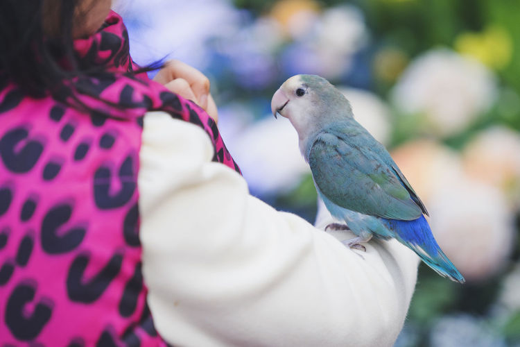 Close-up of parrot perching on woman