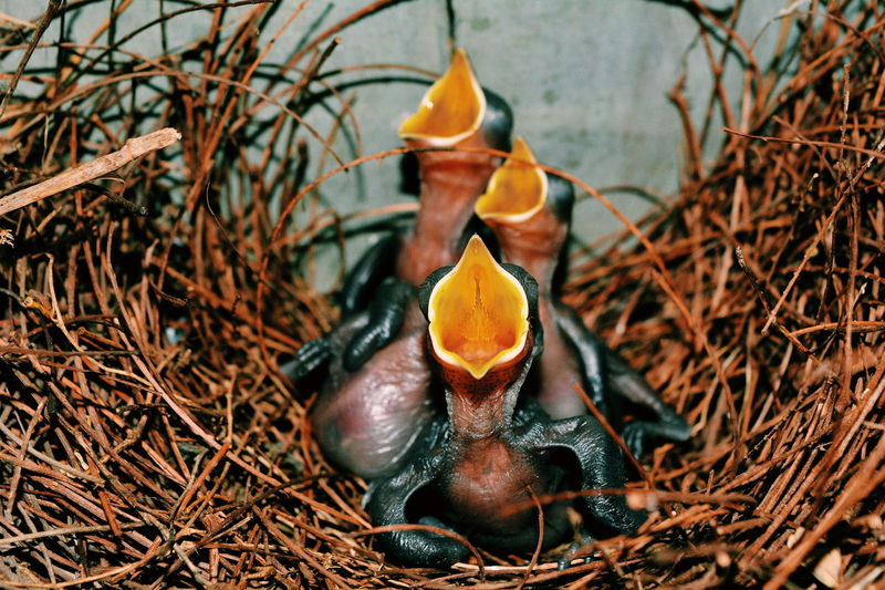 New Born Animal New Born Photography New Born Bird Nikonphotography Nikon Nikon Animal Themes Animal Wildlife Animals In The Wild Beauty In Nature Bird Bird Nest Close-up Day Nature No People One Animal Outdoors Wildlife Young Animal