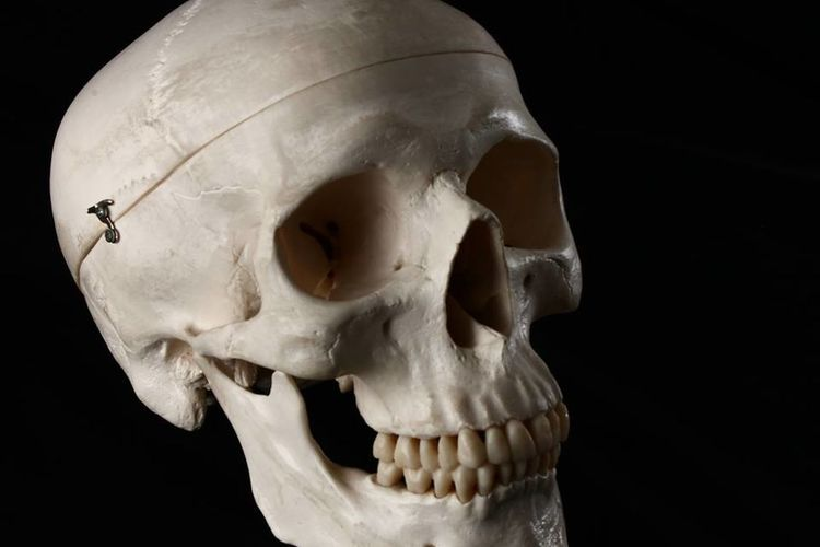 Close-up of human skull against black background