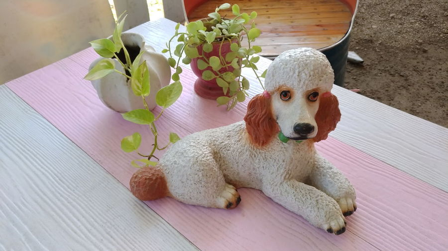 Animal Animal Themes Canine Day Dog Domestic Domestic Animals Flower High Angle View Looking At Camera Mammal No People One Animal Pets Plant Portrait Purple Relaxation Sitting Vertebrate