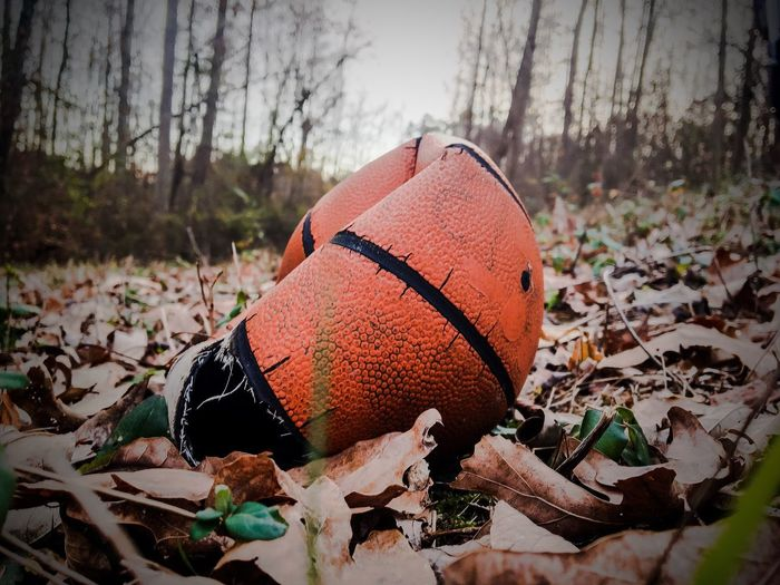 BrokenDreamz~ Tree Autumn Forest No People Nature Outdoors Day Close-up Pumpkin Basketball Grass Leaves🌿 Alone Forest Photography First Eyeem Photo