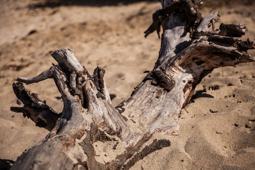 Bone  Close-up Day Dead Plant Dirt Driftwood Field Focus On Foreground Land Log Mud Nature No People Outdoors Selective Focus Timber Tree Tree Trunk Trunk Wood Wood - Material