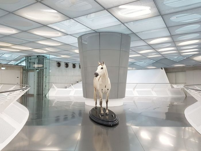 First there were horses than cars Indoors  No People Modern Architecture Built Structure Mercedes-Benz Museum Floor Façade Luxury EyeEm Best Shots Minimal Color Interior Design Horse Shiny Lights Reflections Symmetry Wall Glass Ceiling Bestsellers Windows Circles The Architect - 2017 EyeEm Awards