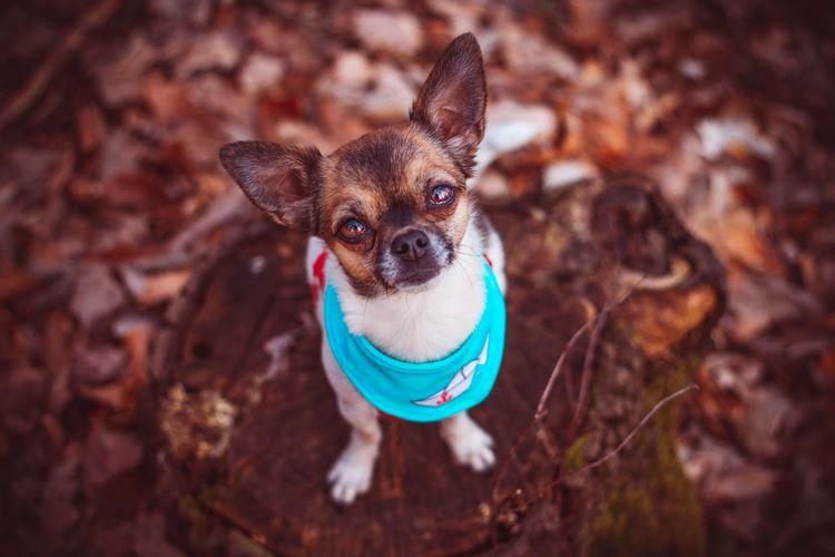 High angle portrait of a dog