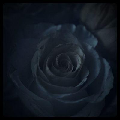 picture in the dark Flowers Flower Rosé Details Lobostudio Lobo_flowers