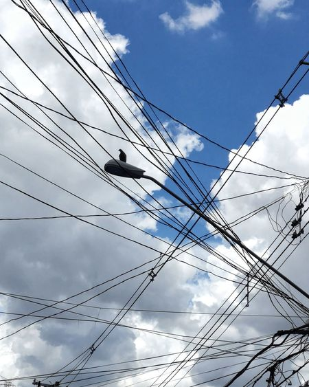 Bird Sky Clouds Telephone Line Technology Computer Network Bird Electricity  Complexity Cable Electricity Pylon Power Supply Communication Power Cable Telephone Pole Electrical Grid High Voltage Sign Power Station Grid Outlet Power Line  Tangled Wire Network Connection Plug Steel Cable Router
