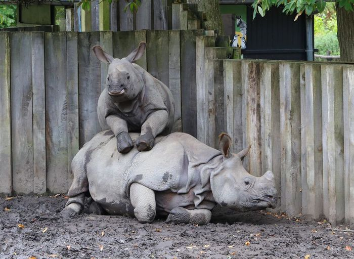 Rhino Mother & Child Animal Themes Day Nature No People Zoo Animals  Zoo Photography