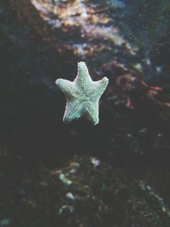 Beautiful Animals  étoile De Mer Aquarium Summer2014