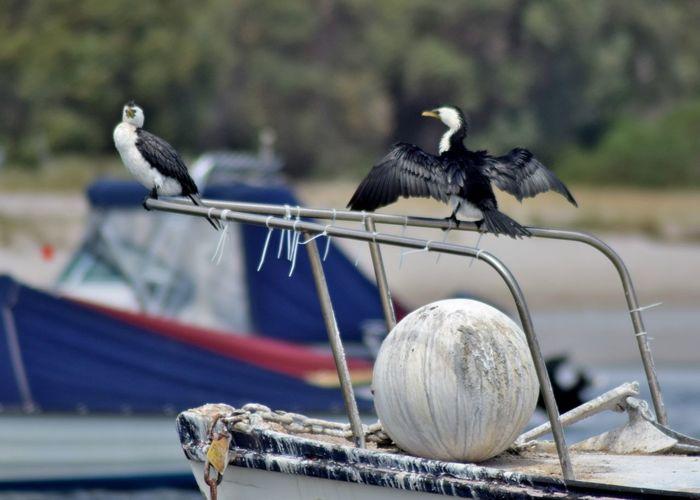 Animal Themes Beach Bird Boat Flock Of Birds Nautical Vessel Perching Sand Sea Water Wildlife