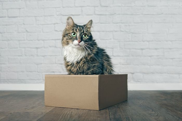 Cute Maine-Coon cat siting in a cardboard box and loking sideways. Cats Of EyeEm Animal Themes Box Box - Container Brick Cardboard Cardboard Box Cat Container Domestic Domestic Animals Domestic Cat Feline Indoors  Looking Sideways Mainecoon Mammal No People One Animal Pentax Pets Sitting Vertebrate Wall - Building Feature Whisker