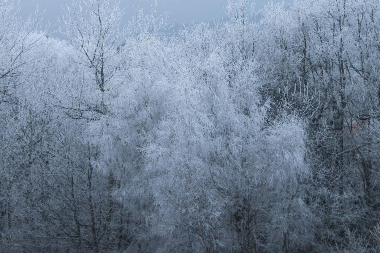 FULL FRAME SHOT OF TREES DURING WINTER