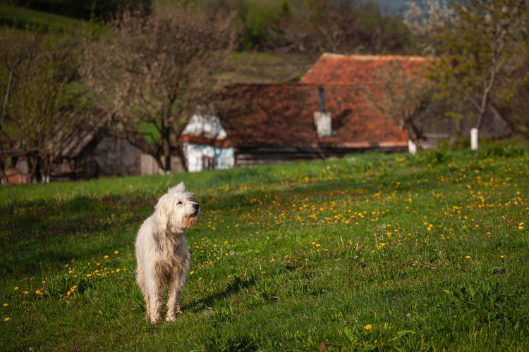 View of dog on field