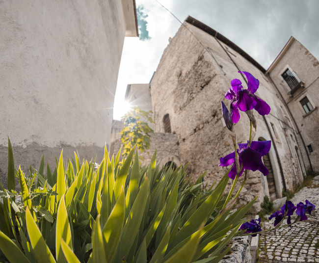Close-up of purple flowering plants against wall