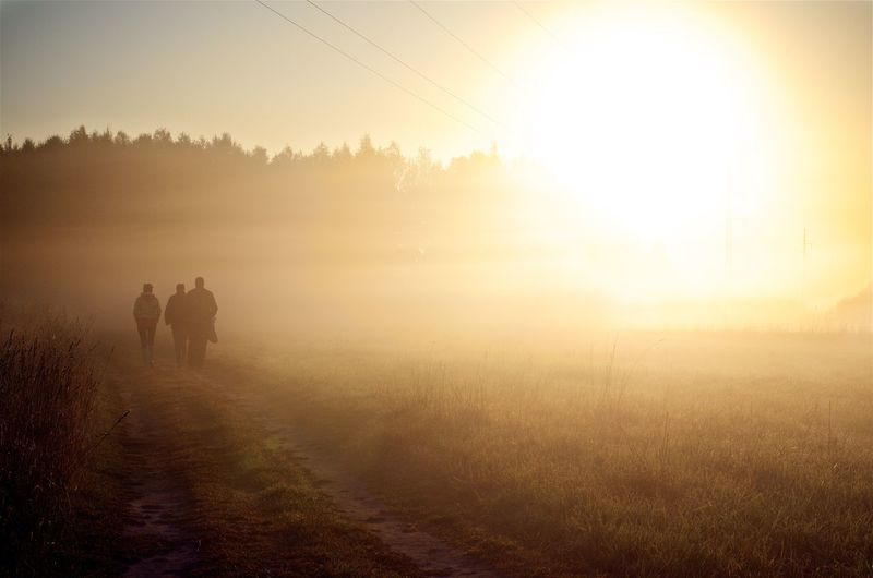 Mushroom puckers Sunrise Fields And Sky Field Fields Fieldscape Fields Of Gold Yellow Colour Mist Misty Morning Misty Misty Landscape