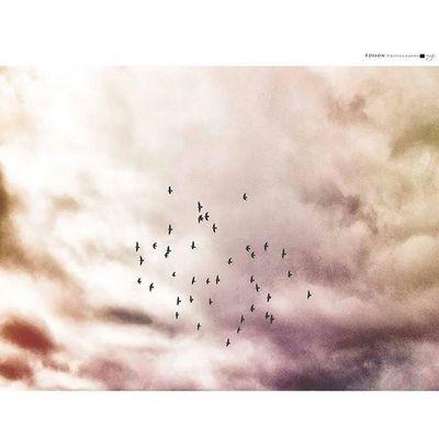 【 歸 】 HuaweiMate7 Return 365Snap Instasize Sky Bird Beautiful View