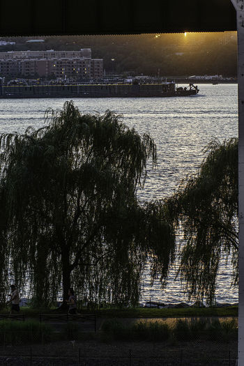 Hudson River Manhattan NYC NYC Street Photography Riverside Park Nature Streetphotography Sunset Tranquil Scene Tree Water