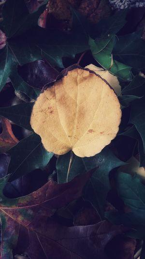 Leaf Nature No