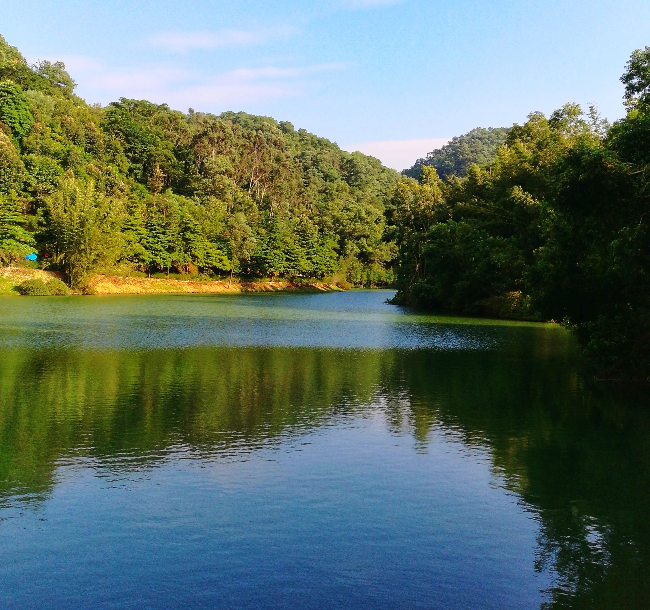 tree, water, reflection, lake, tranquil scene, nature, tranquility, scenics, beauty in nature, outdoors, no people, sky, day, waterfront, growth, forest, landscape, mountain, grass