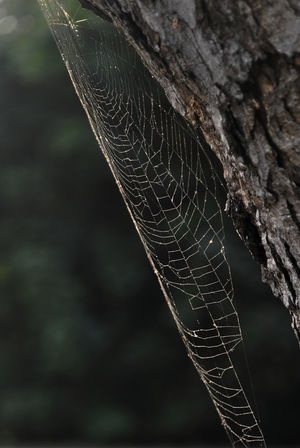 Just another spider web Spider World Animal Themes Beauty In Nature Close-up Focus On Foreground Fragility Hunting Insects  Nature Spider Web Spiderweb Trap Trapped Web