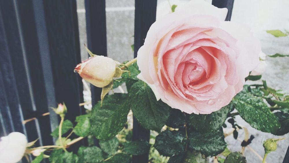 Flower Macro_flower Flowers Flower Porn