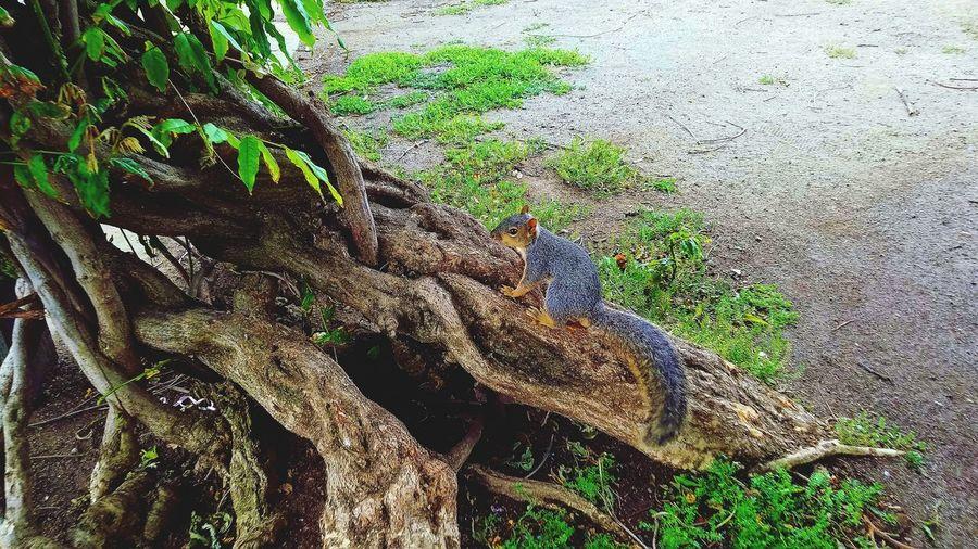 Monkey perching on tree branch