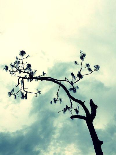 Need a bird