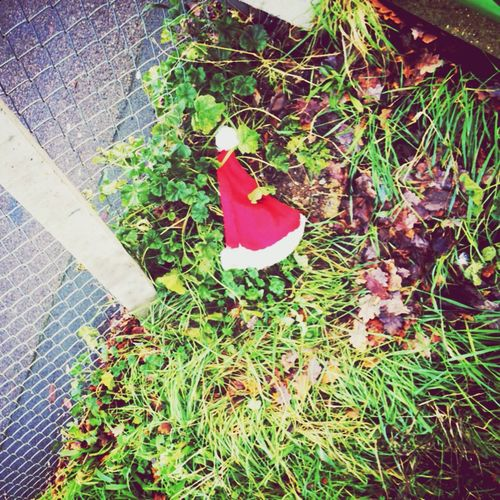 Lost Christmas hat