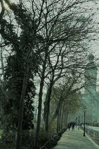 Leipzig City People Walking Tree Branch Men Sky Grass Green Color Walkway