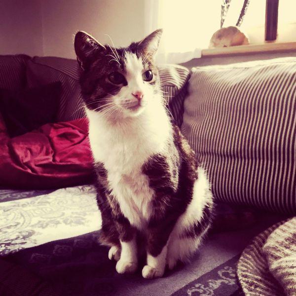 Cat / Katze gegen Osterhase 😝