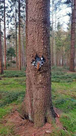 View of a tree trunk on field