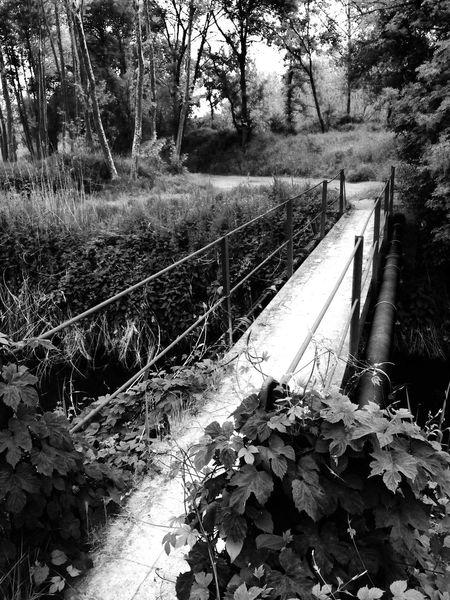 Bridges EyeEm Bnw Bw_collection EyeEm Best Shots - Black + White