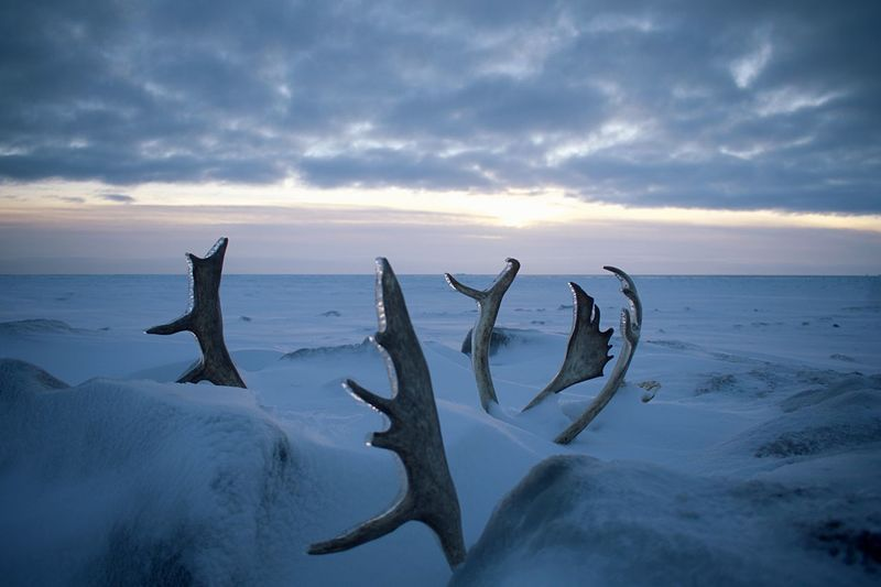 Driftwood on snow covered land against sky during sunset