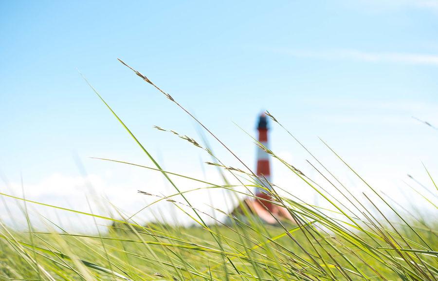 listen.. Beauty In Nature Blurry Blurry Background Eye4photography  EyeEm Best Shots Focus On Foreground From My Point Of View Grass Gräser Im Vordergrund Leuchtturm Leuchtturm Westerhever Lighthouse Naturschutzgebiet Wattenmeer Nikonphotographer Nikonphotography Open Edit Outdoor Photography Outdoors Schleswig-Holstein Seaside Sky And Clouds The Great Outdoors - 2017 EyeEm Awards Unscharf Westerhever Westerhever Lighthouse